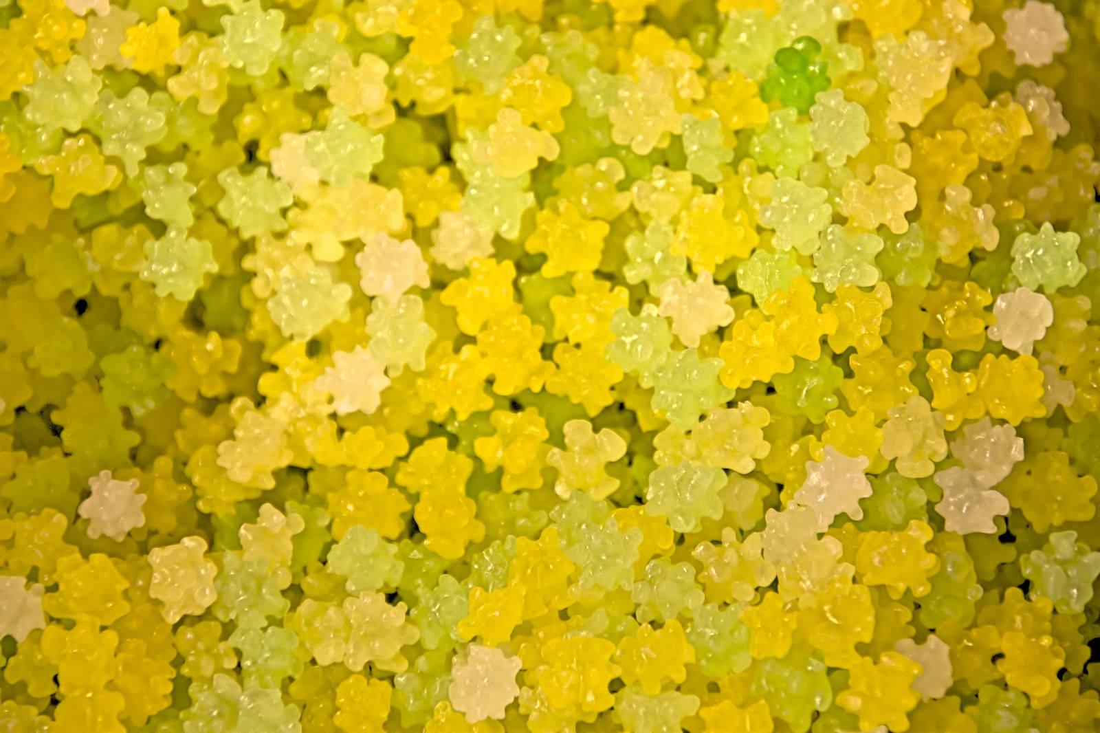 「黄色いコンペイトウ」の写真