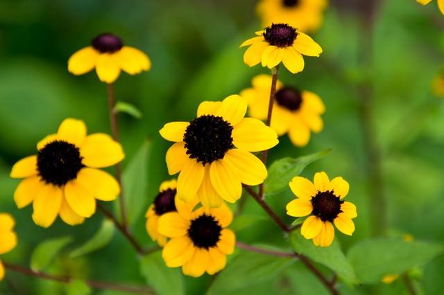 黄色いお花の写真