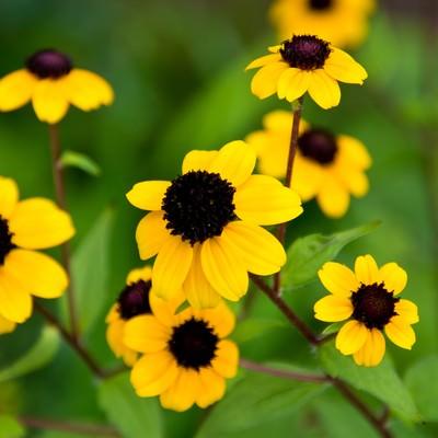 「黄色いお花」の写真素材