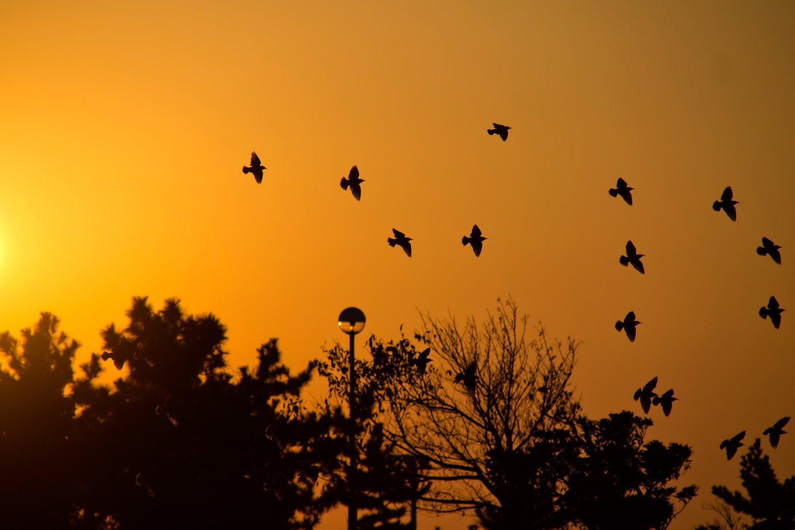 「金色の空と鳥たち」の写真