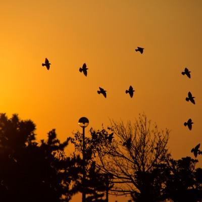 「金色の空と鳥たち」の写真素材