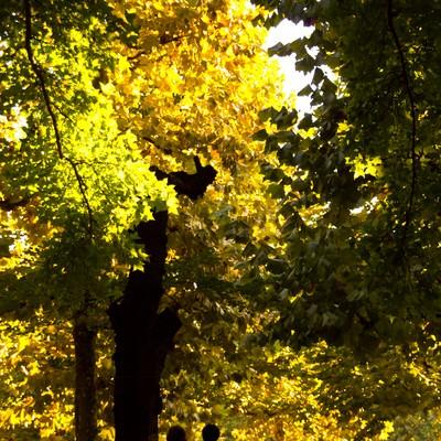 「紅葉とベンチの二人」の写真素材
