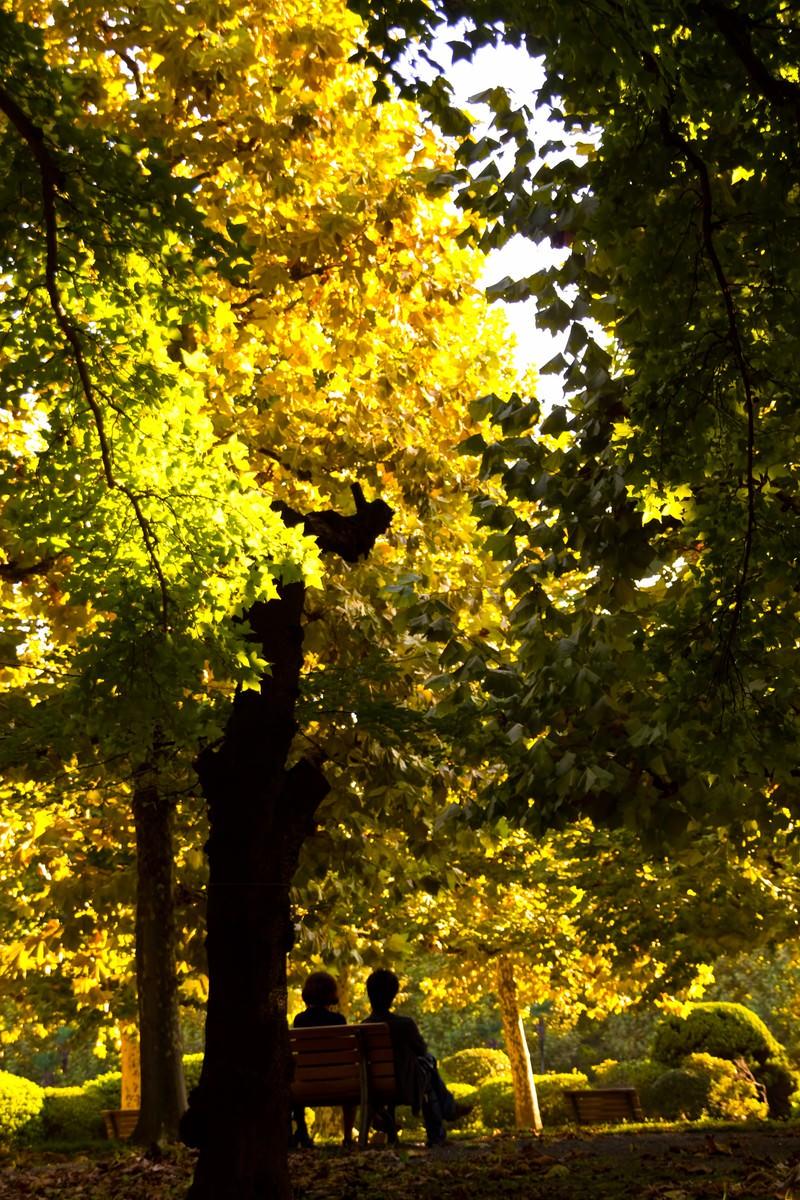 「黄葉とベンチの二人」の写真