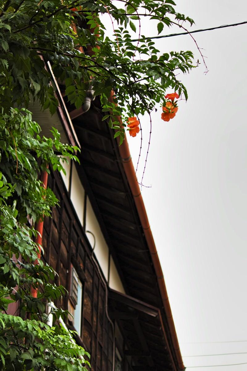 「木造のアパートと雨どい」の写真