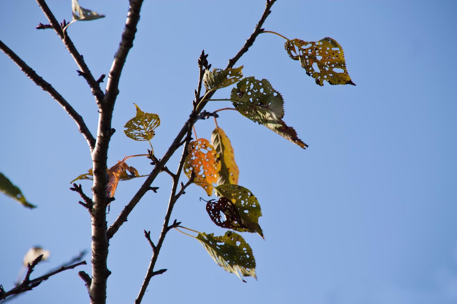 虫に食われた枯葉|ぱくたそフリー素材