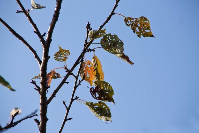 虫に食われた枯葉の写真