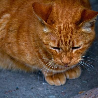 「お座りする茶猫」の写真素材