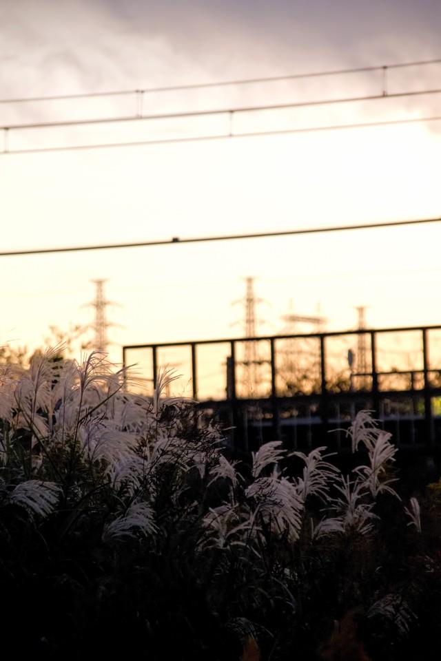 夕焼けと線路沿いのすすきの写真