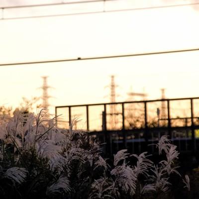 「夕焼けと線路沿いのすすき」の写真素材