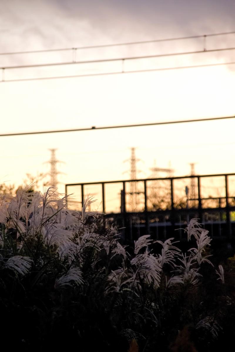 「夕焼けと線路沿いのすすき夕焼けと線路沿いのすすき」のフリー写真素材を拡大