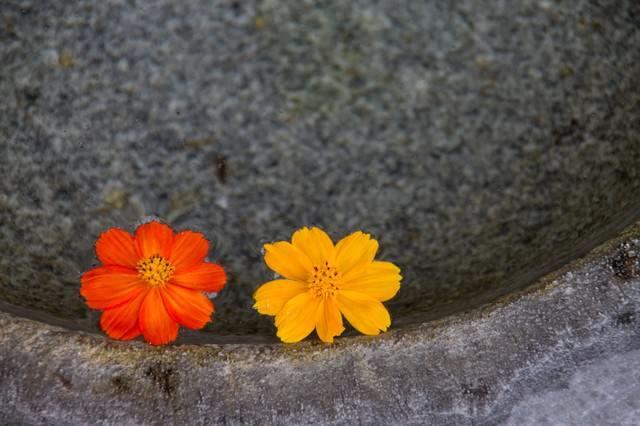 水面に浮かぶお花の写真