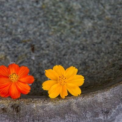 「水面に浮かぶお花」の写真素材