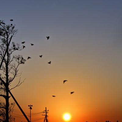 「陽がのぼる公園」の写真素材