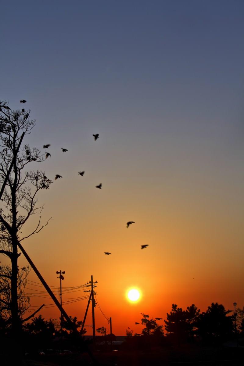 「陽がのぼる公園」の写真