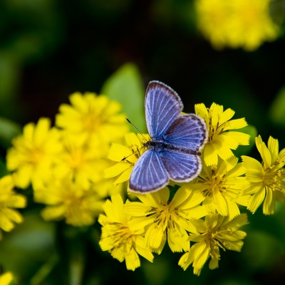 「黄色い花にとまる蝶」の写真素材