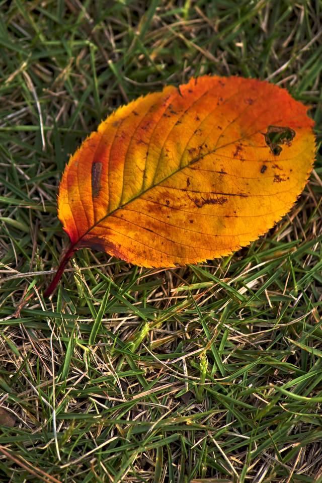 黄色い落ち葉の写真