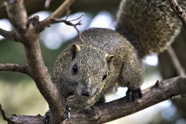 木に掴まる野生のリスの写真