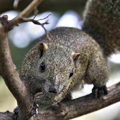 「木に掴まる野生のリス」の写真素材