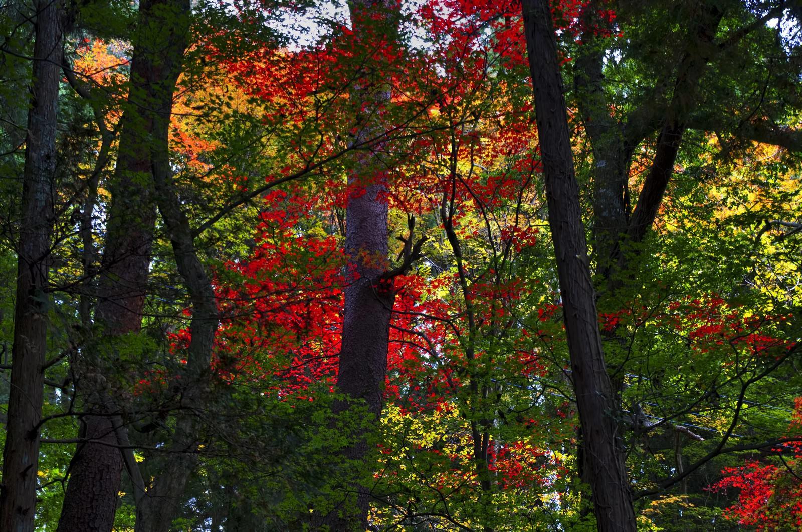 「黄葉した森」の写真