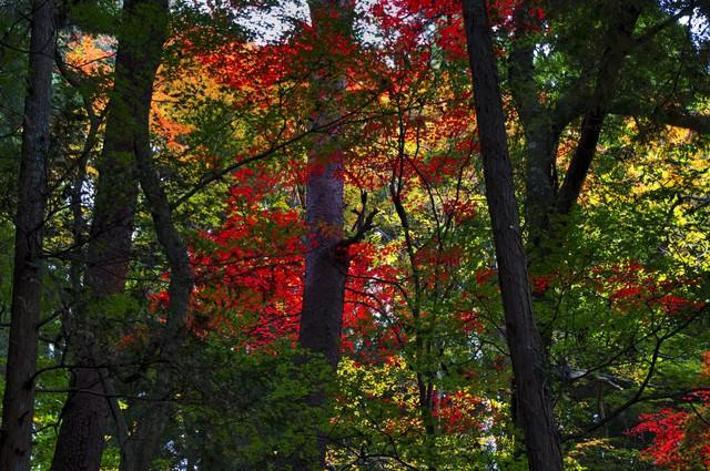 黄葉した森の写真