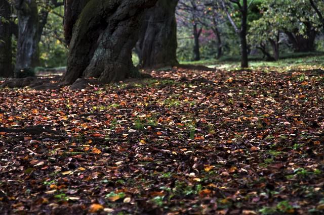 公園の落ち葉や木々の写真
