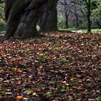 「公園の落ち葉や木々」の写真素材