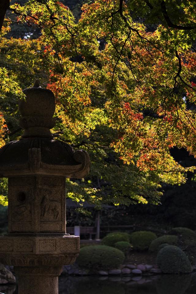 灯篭と黄葉しはじめの庭園の写真