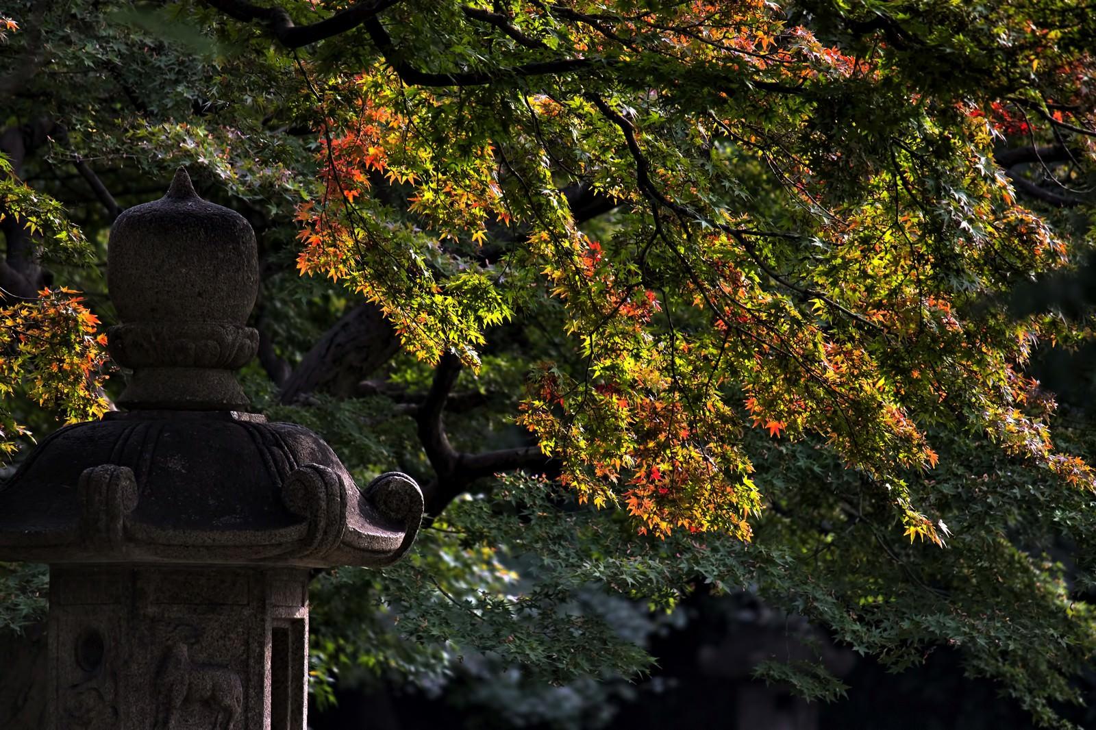 「灯篭と黄葉しはじめ」の写真