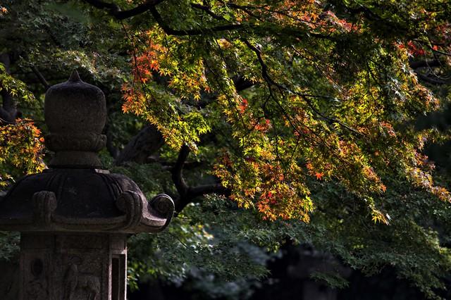 灯篭と黄葉しはじめの写真