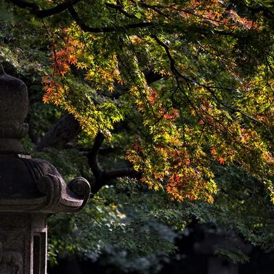 「灯篭と紅葉しはじめ」の写真素材