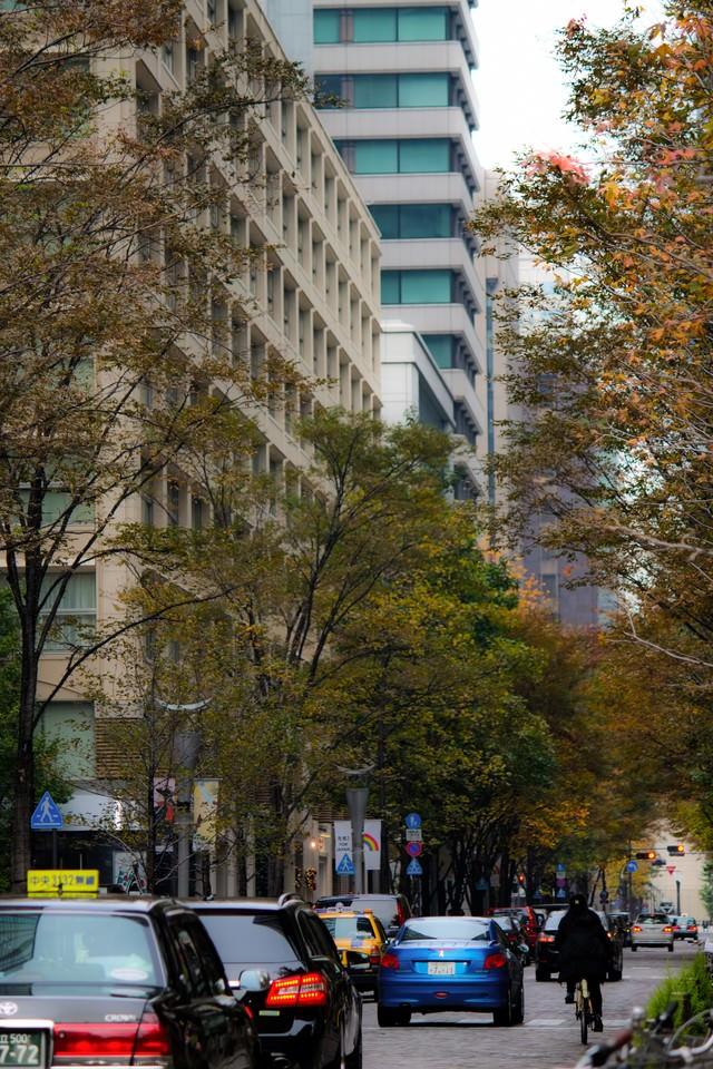 秋の林道と車の写真
