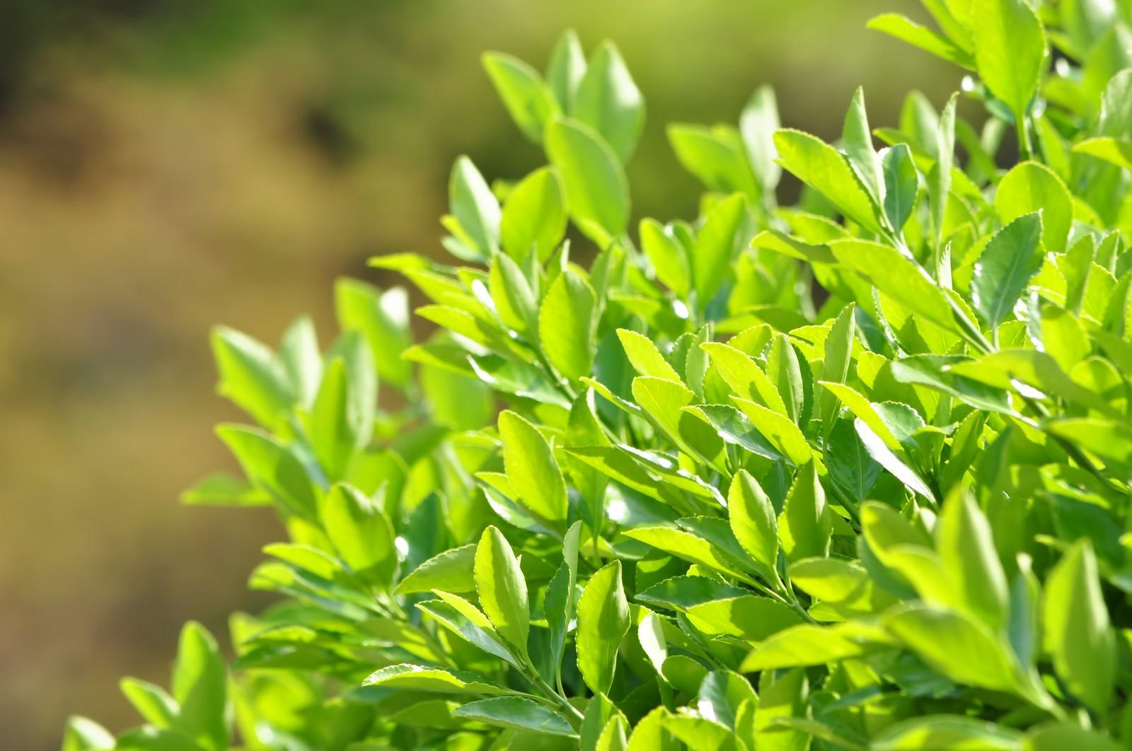 「青々と茂った植物」の写真