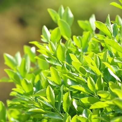 「青々と茂った植物」の写真素材