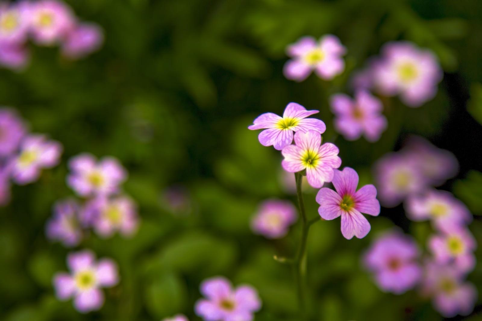 「小さく咲くピンクの花」の写真