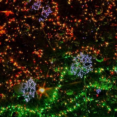 クリスマスツリーのイルミネーションの写真