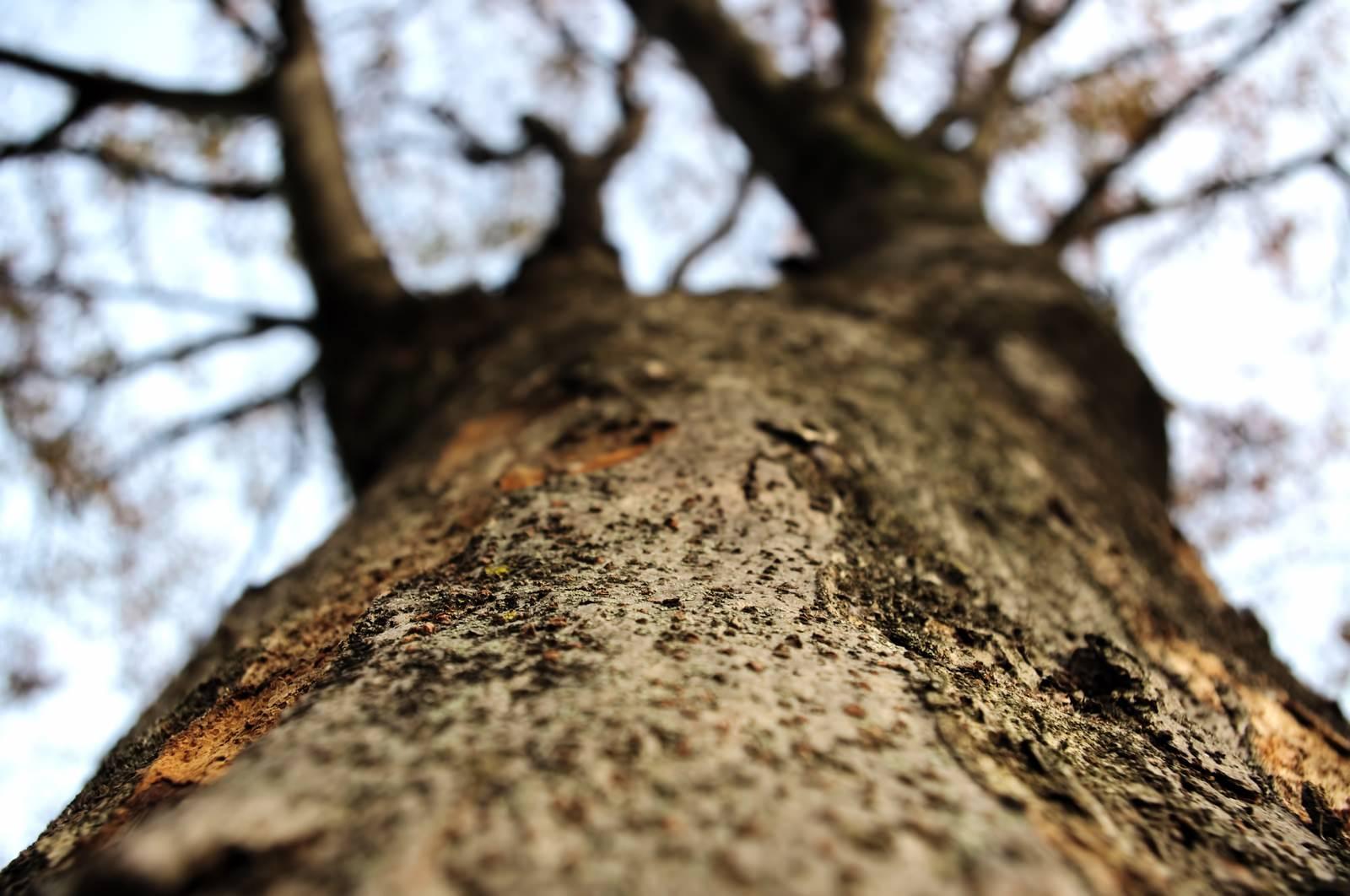 「冬の樹木を見上げる」の写真
