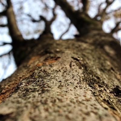 「冬の樹木を見上げる」の写真素材