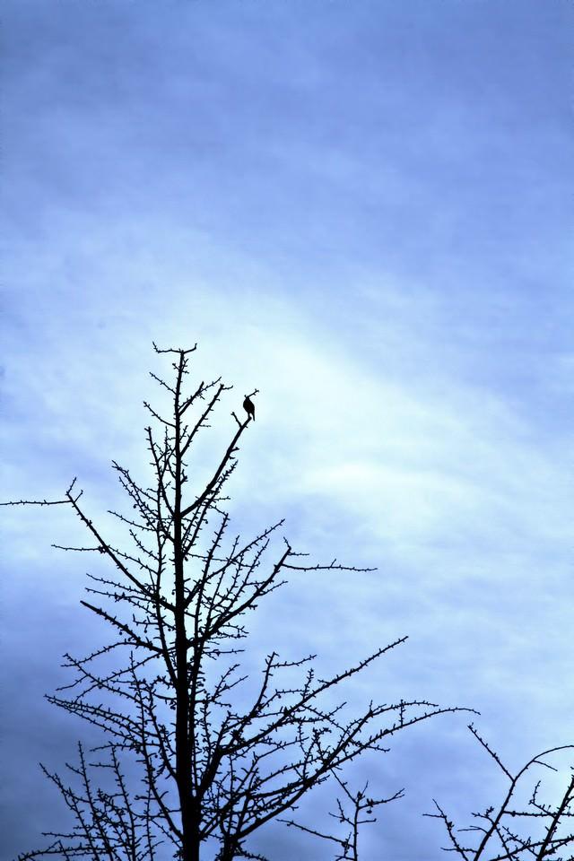 葉が落ちた木と寂しげな空模様の写真