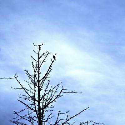 「葉が落ちた木と寂しげな空模様」の写真素材