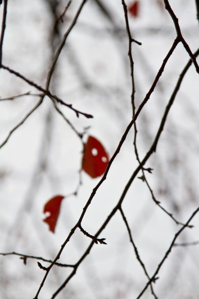 赤い枯葉と冬模様の写真