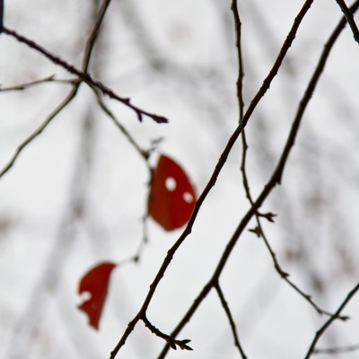 「赤い枯葉と冬模様」の写真素材