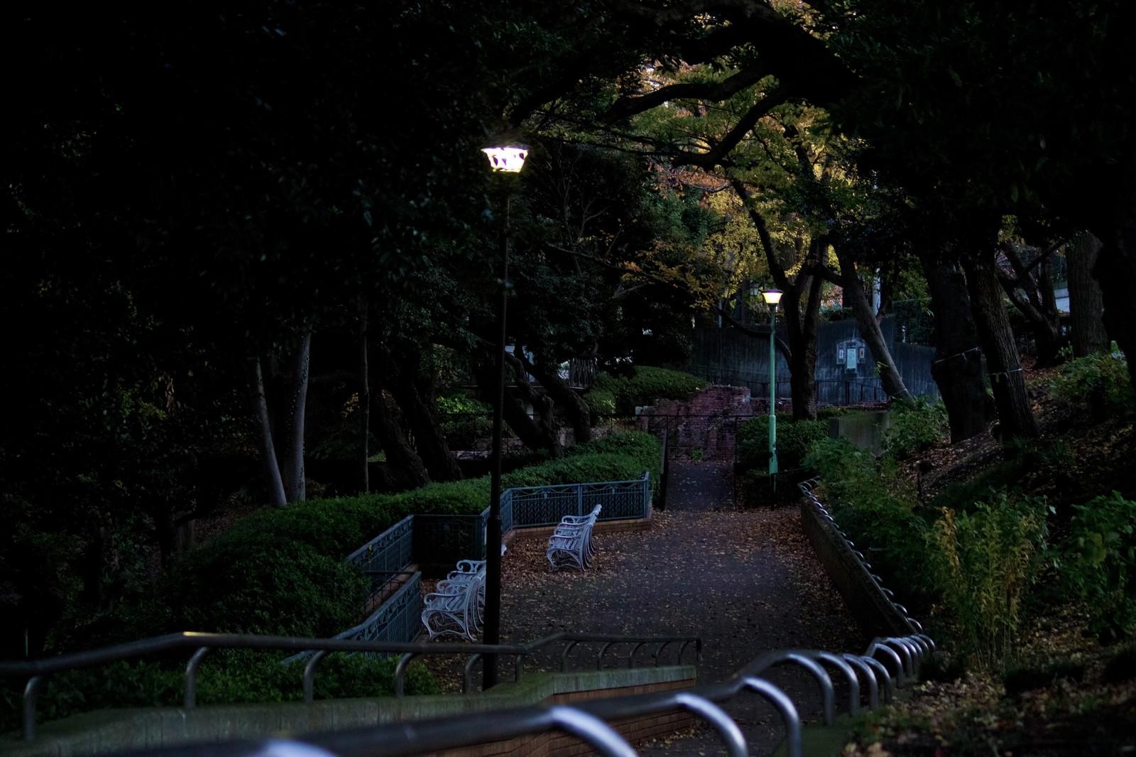 「日が暮れた公園と階段」の写真