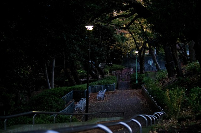 日が暮れた公園と階段の写真