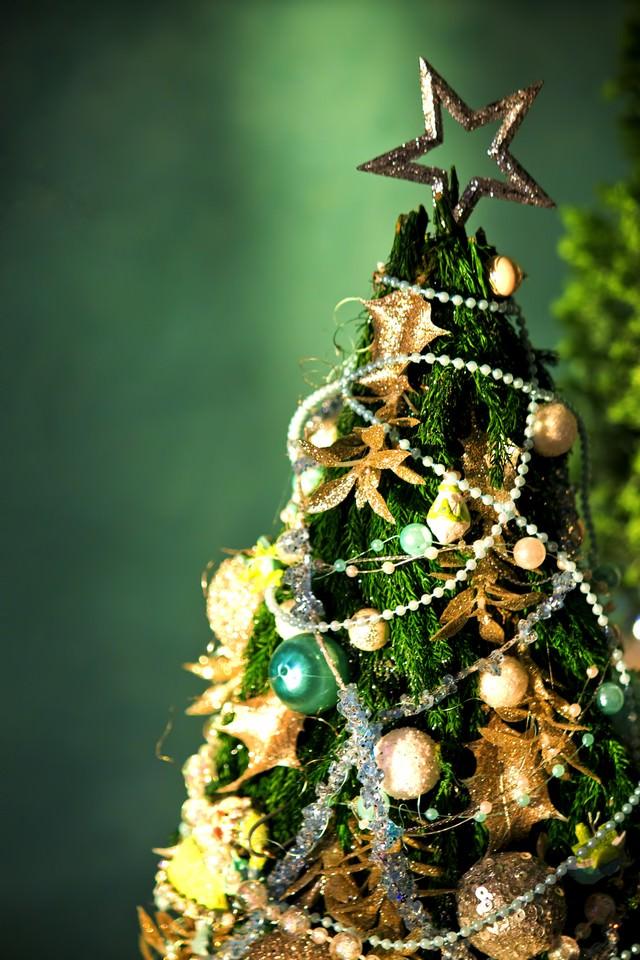 小さいクリスマスツリーの写真