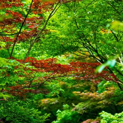 「一部が紅葉した葉」の写真素材