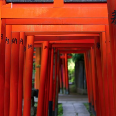 稲荷神社と赤い鳥居の写真