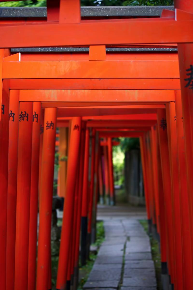 「稲荷神社と赤い鳥居」の写真