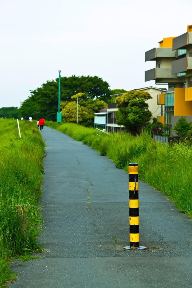 河川敷の散歩コースの写真