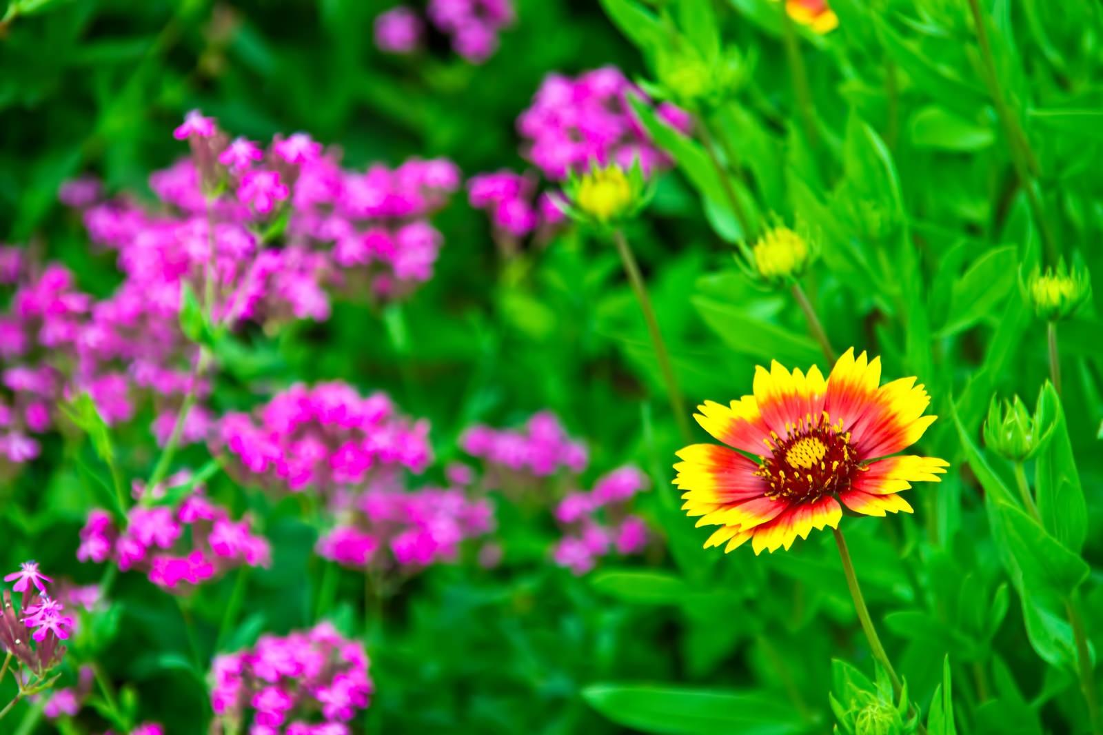 「黄色とオレンジ色の花」の写真