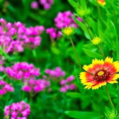 「黄色とオレンジ色の花」の写真素材